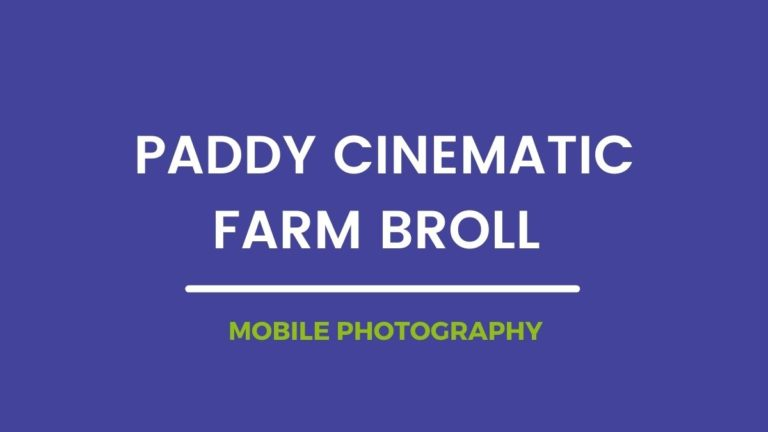 Paddy Cinematic Farm Broll Mobile Photography | Samsung | Paddy field stock footage